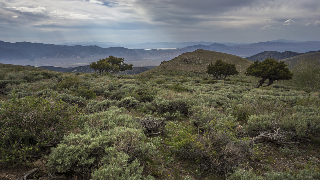 view of the shoshone range from the toiyabe crest